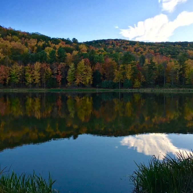 Binghamton University Nature Preserve.